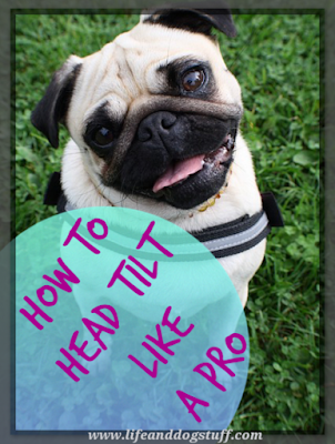 How To Head Tilt Like a Pro