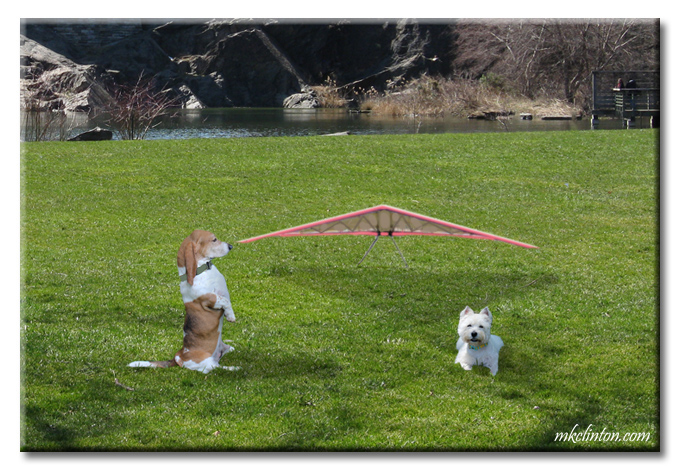 Bentley Basset Hound and Pierre discuss National Kite Flying Day