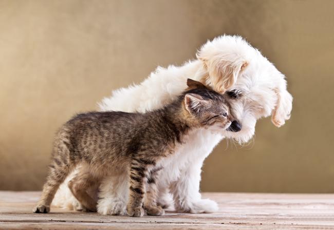 Pies i kot w jednym domu
