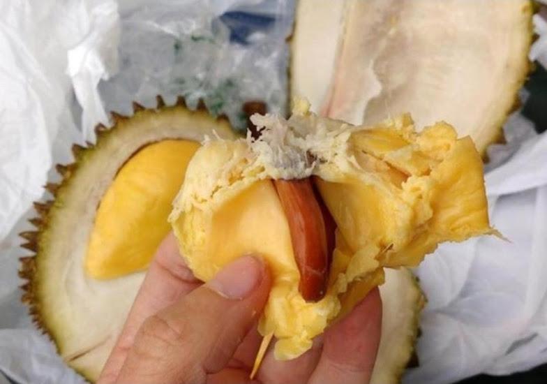 bibit durian Musang king okulasi super Sumatra Barat