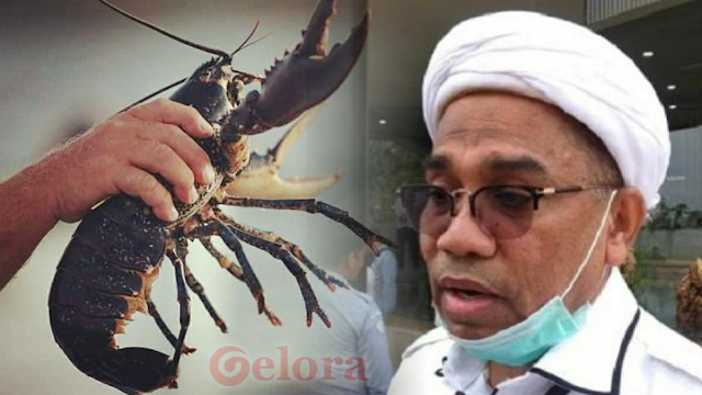 Nah lho, KPK Selidiki Dugaan Aliran Dana Ekspor Benih Lobster ke Ngabalin