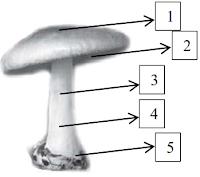 materi biologi kelas 10 tantang jamur