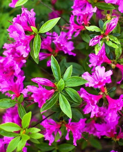 The Best Fragrant Flowers for Your Garden