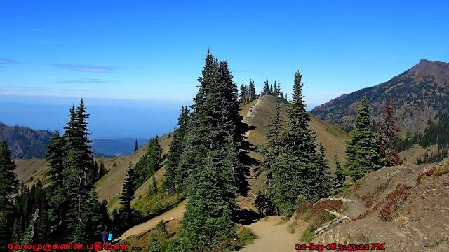 High Ridge Trail Mount Angeles