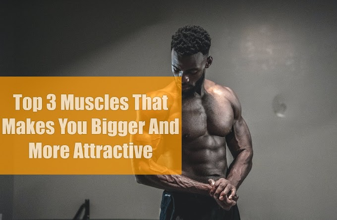 Top 3 Muscles That Makes You Bigger And More Attractive