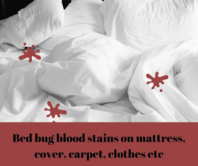 Bed bug blood stains on bed sheets