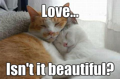 Love is Beautiful and so are Cat Rescue Stories