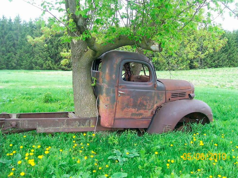Tree growing through car