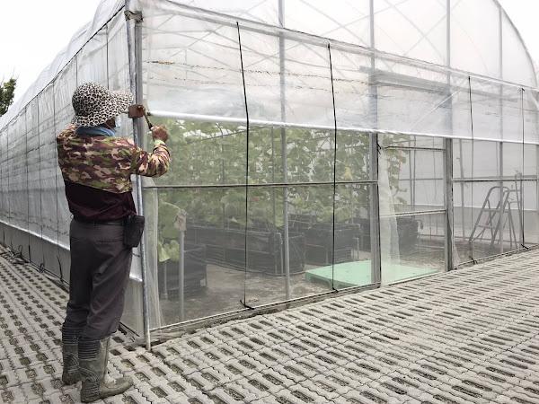 輕颱「烟花」逼近 臺中區農業改良場籲農民加強防颱