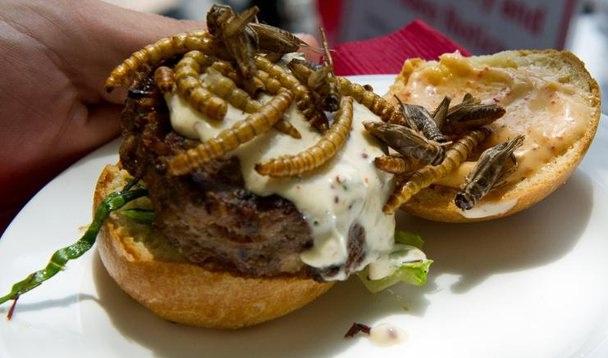 L'Europa approva i vermi come cibo sicuro per il consumo