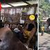 Isang lalaki ang hindi natinag sa kakalaro ng ML kahit naararo na ng Bus ang kanilang bahay