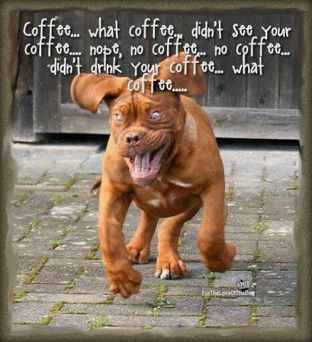 Caffeinated Dog is HYPER! Coffee, WHAT COFFEE?  Friday Frivolity Dog Memes and Link-Up! via Devastate Boredom