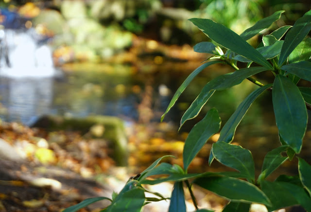 close up shot of green leaves with a small waterfall and stream out of focus in the background