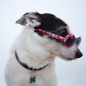 Jacobo el cachorro - Cuento Infantil (Audio/Lectura)
