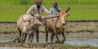need-land-for-farmers