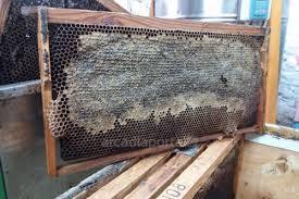 Επιλεγμένες μελισσοκομικές συμβουλές #8 e-Melissokomos.gr