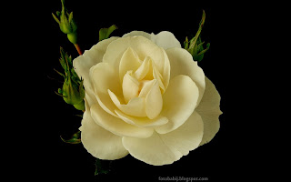 http://fotobabij.blogspot.com/2015/03/roza-diamond-border-rose.html
