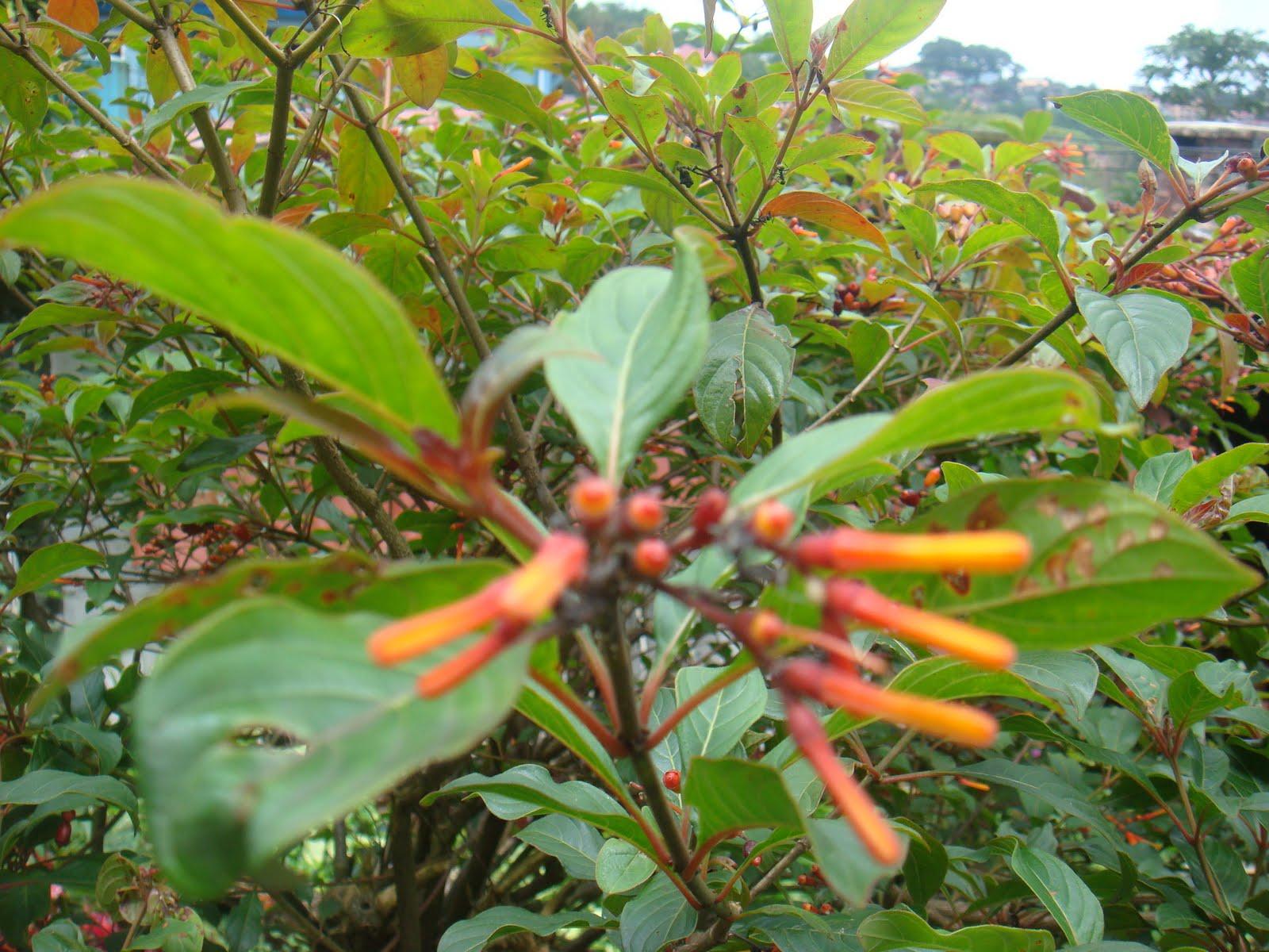 Garden Bush: Eileen First Interest: Beautiful Plants And Flowers