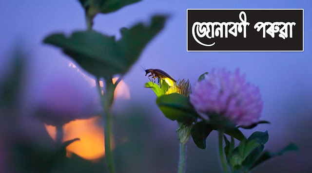 Junaki Poruwa Fireflies in Assam