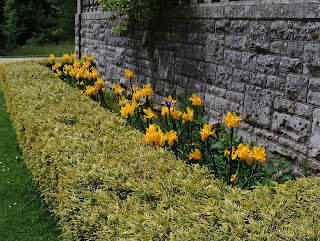 Garden design Yellow Kingston Maurward Green Fingered Blog