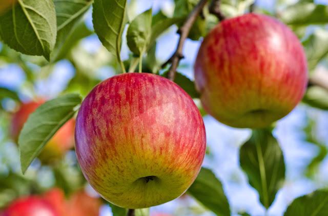 Fuji Apple: Fact About Fuji Apple ,Benefit of Fuji Apple, Side Effect -MergeZone
