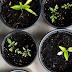 """Κάλεσμα σε startups που """"συνδυάζουν"""" τρόφιμα και γεωργία με data science"""