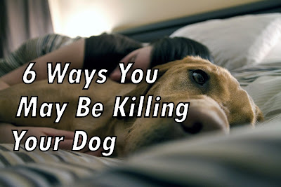 6 Ways You May Be Killing Your Dog