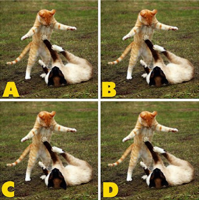 Which image is different? image 40