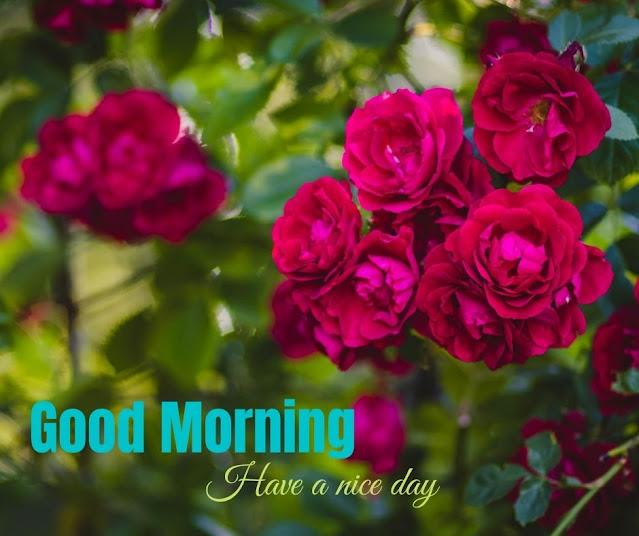 flower photo good morning