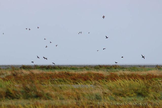 Wadden Sea UNESCO Netherlands