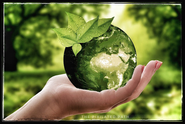 Great Ways to Celebrate the 50th Anniversary of Earth Day from Home
