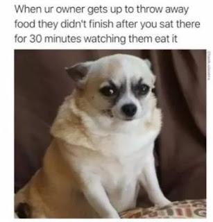 food,doggo