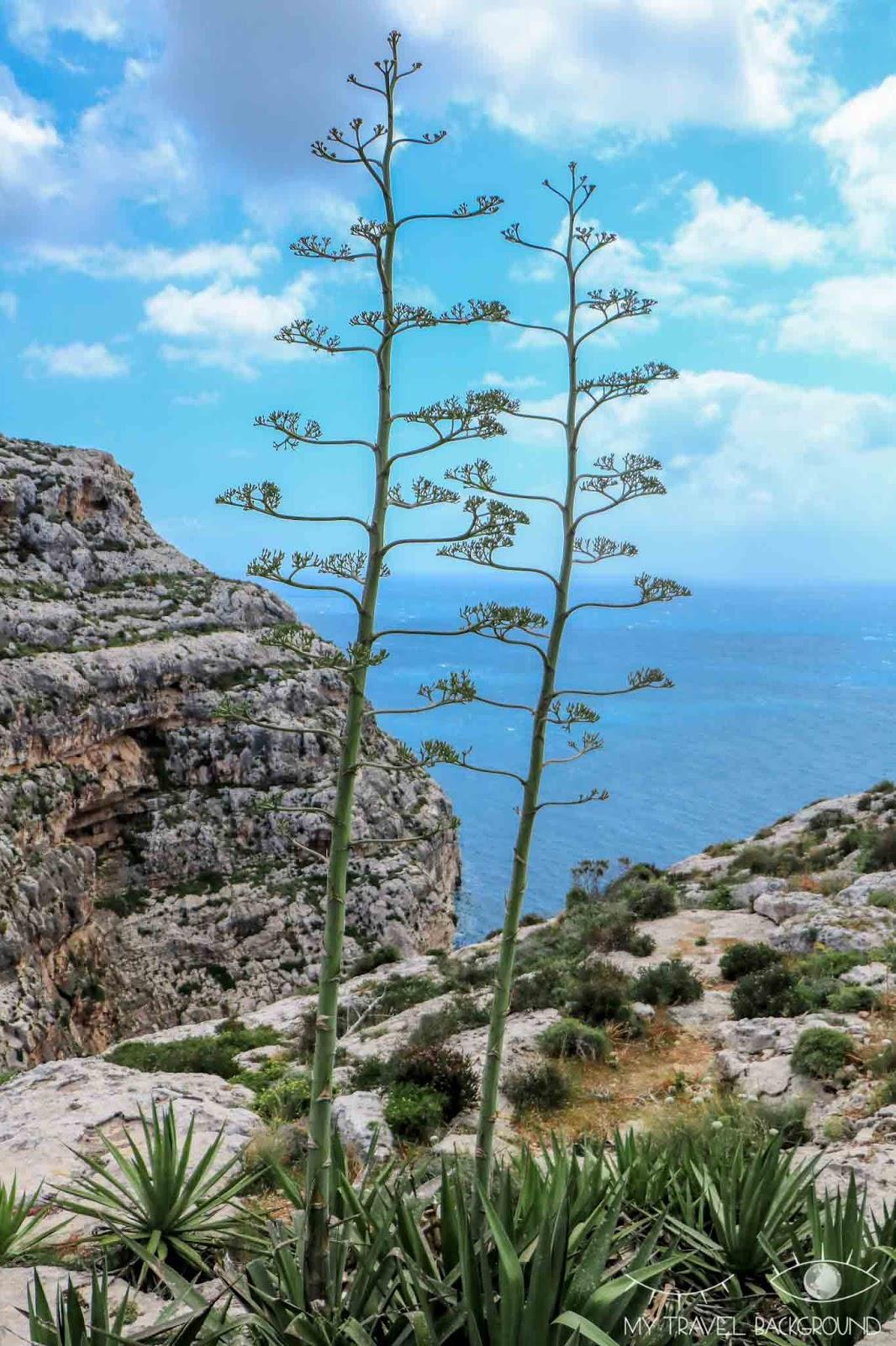 My Travel Bakground : voyage organisé à Malte, mon avis