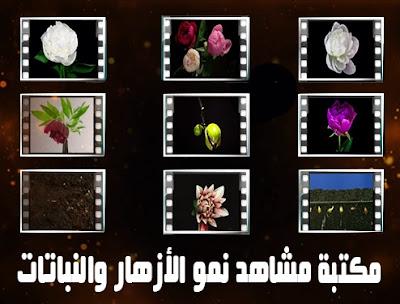 flowers footage shutterstock