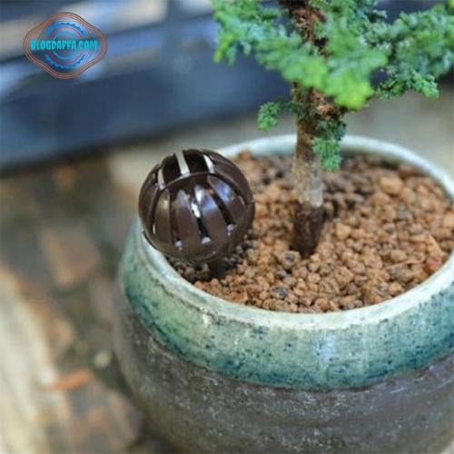 Waktu memupuk bonsai yang tepat