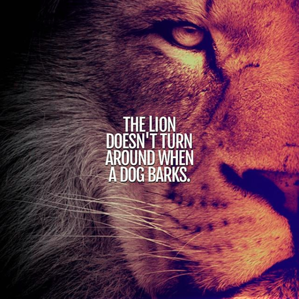 The lion doesn't turn around when a dog barks.