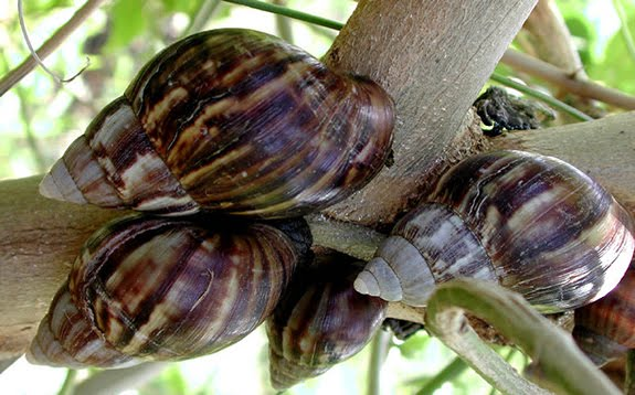How To Start Profitable Snail Farming In Ghana