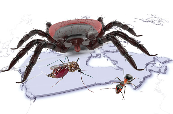 Workers Comp: Lyme Disease and Additional Insect Risks for the particular Construction Worker