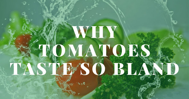 Why tomatoes taste so bland