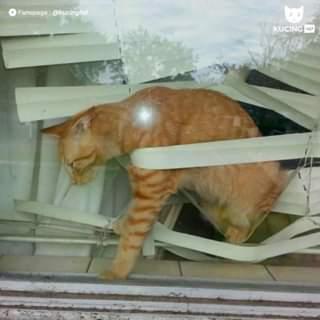kucing oyen nyangkut