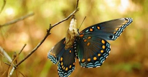 Eu já fui lagarta mas a minha natureza sempre foi borboleta…
