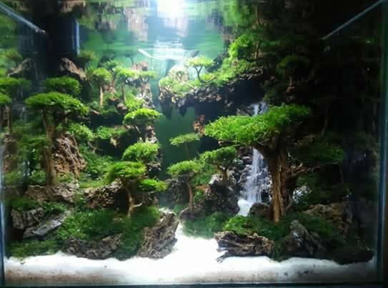 hồ thủy sinh suối thác với bố cục rừng