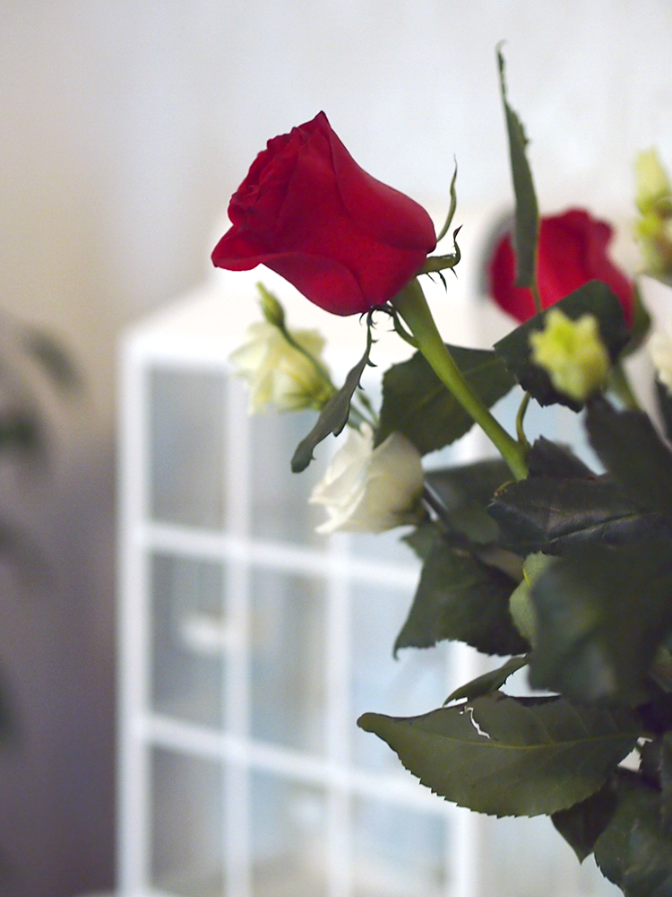 punainen kukka