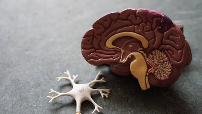 8-foods-for-memory-to-improve-brain-and-sharpen-your-mind.
