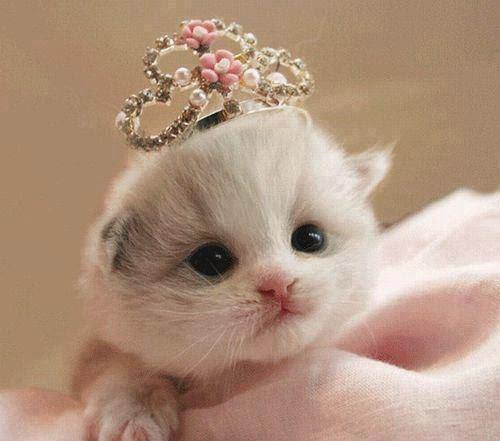 cute miss cat