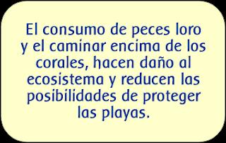 edupunto,dominicana,corales,pez loroplayas,arena blanca,costas
