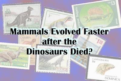 Darwinists are conjecturing about rapid evolution, but ignoring problems with their ideas. The Genesis Flood provides better answers than secularists can.