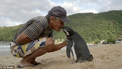 Ось уже п'ятий рік поспіль місцевий житель Жуан Перейра де Соуза приймає у себе в гостях пінгвіна на прізвисько Дінді