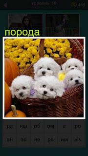 в корзине с цветами сидят несколько белых щенков породы пудель