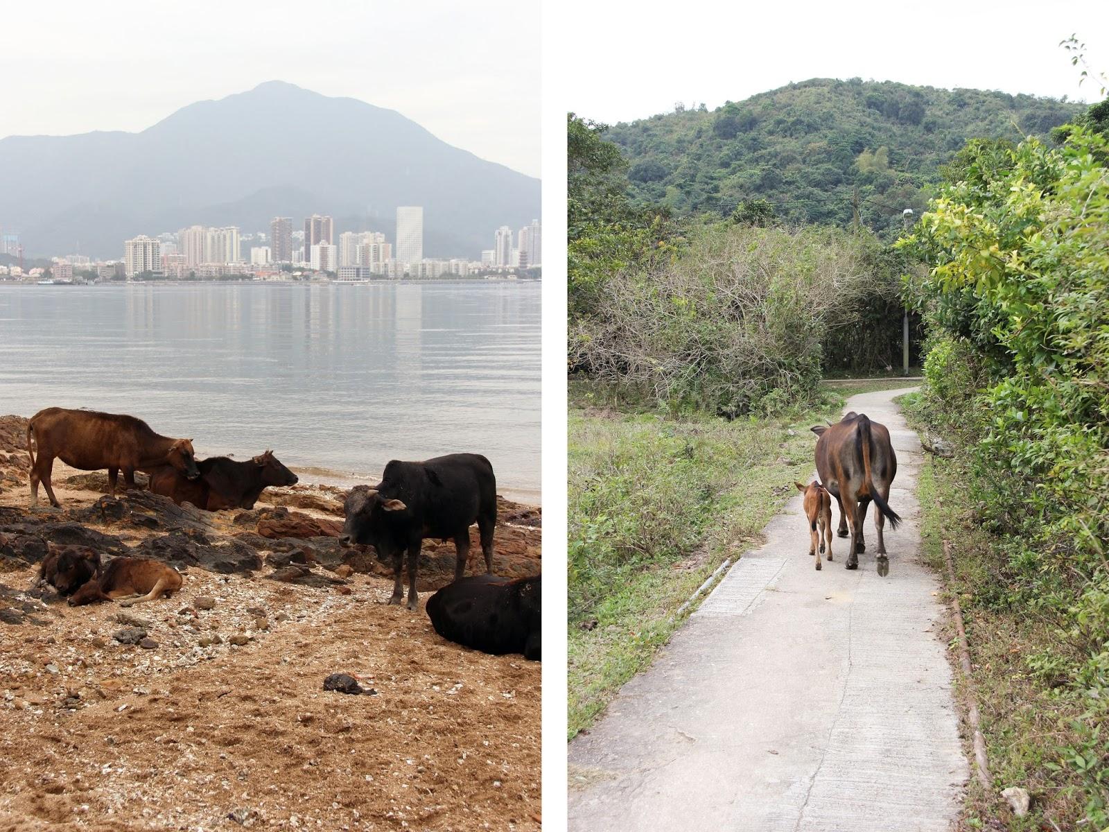 Hong Kong | Sevengrams